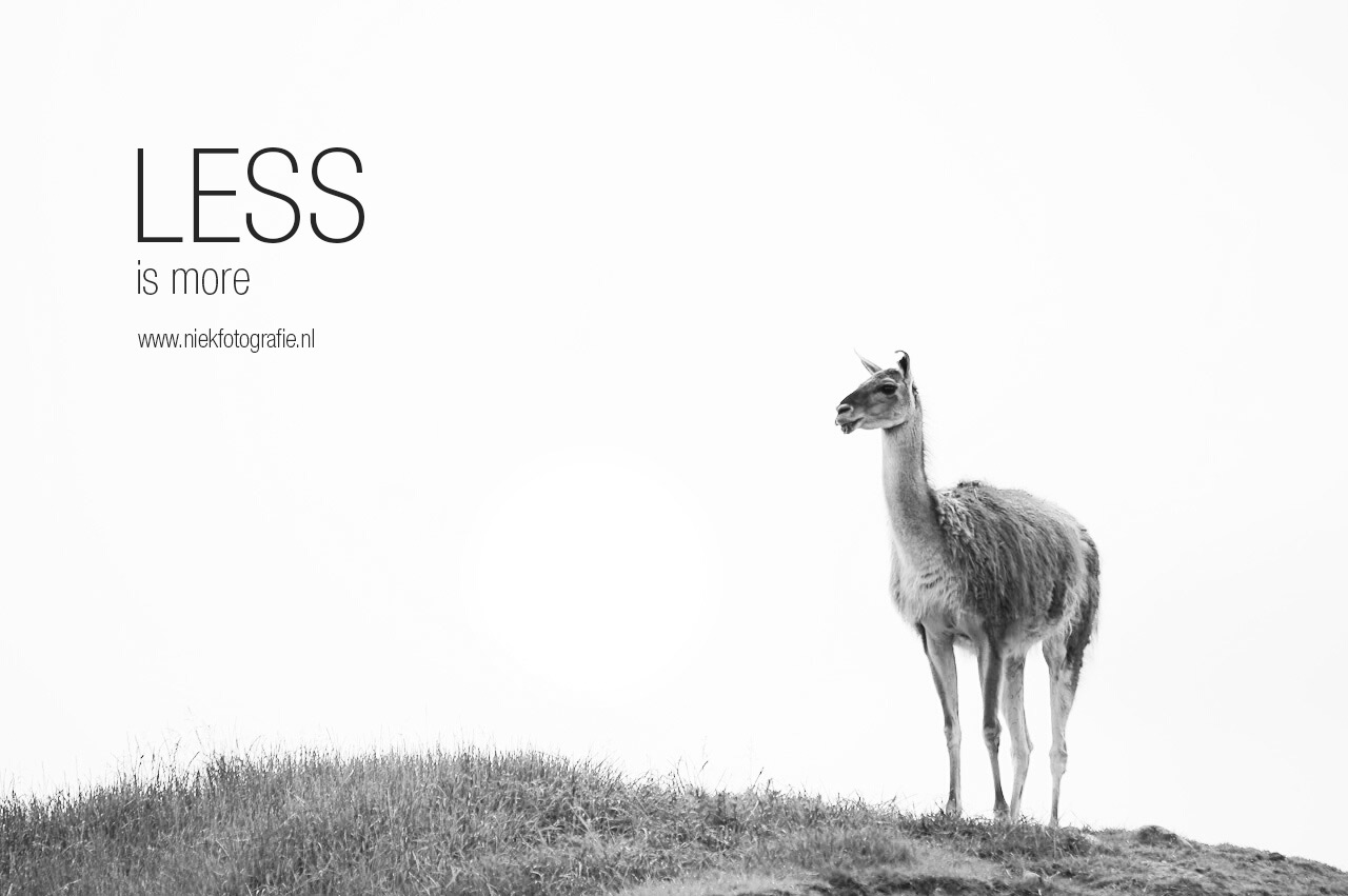Less is More - Lama in Dierenpark Emmen