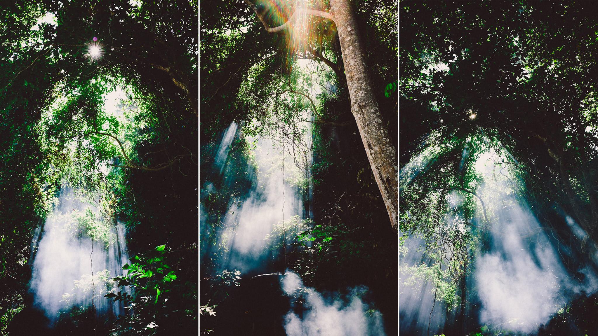 Perhentian jungle